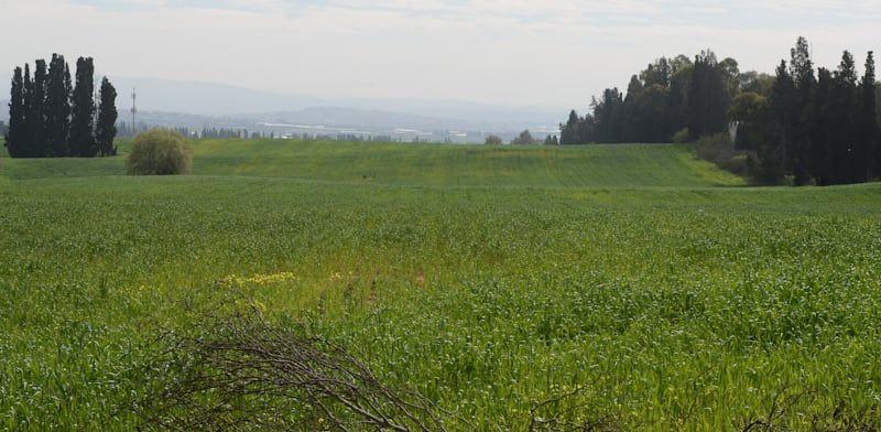 האם השבת קרקע חקלאית למדינה נחשבת כהפקעה לצורכי מס?